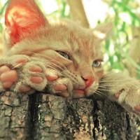 Фотография профиля Александра Мочанова ВКонтакте