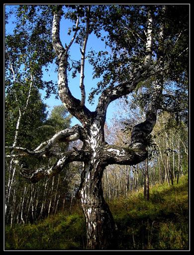 Из чего сделать рукоять для ножа: Дерево. Часть 1., изображение №5