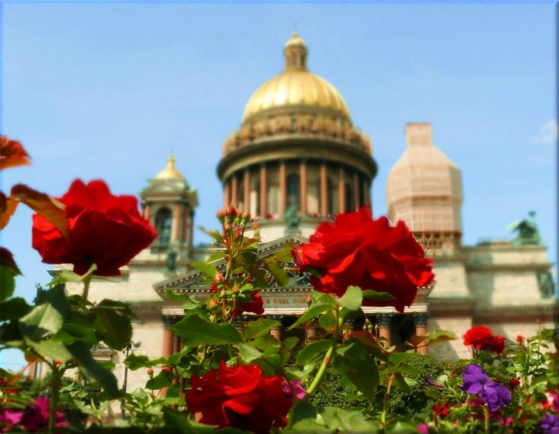 Розы полезны для Благодати, изображение №3