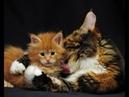 Веселые картинки. Мама кошка и котята. Забавные кошки и котята.